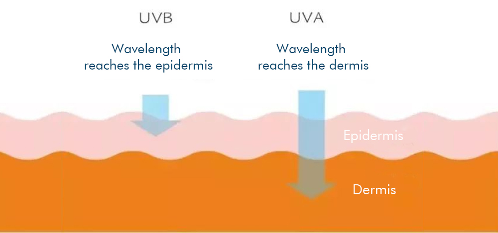 UVA and UVB wavelength characteristics, The difference between UVA and UVB, The radiation depth of UVA and UVB to the skin