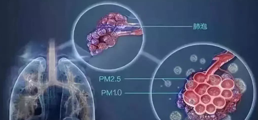 The harm of pm2.5, PM2.5 damage to the lungs