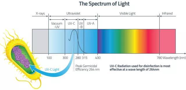 the spectrum of light, Ultraviolet light band