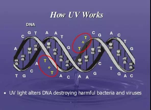 UV light    how UV Works The role of UV How to sterilize UV